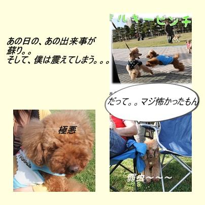 cats7_20100510094057.jpg