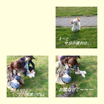 cats_20100321185454.jpg