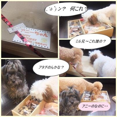 cats_20100725101836.jpg