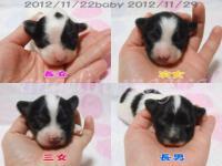20121122baby