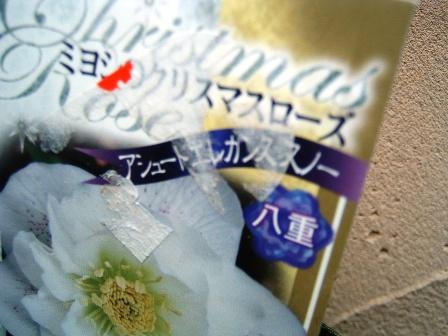 kuriro10-39.jpg