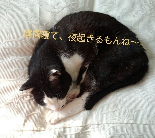 fc2_2013-01-16_13-36-00-253.jpg