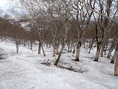 forblogpic_20110514220558.jpg