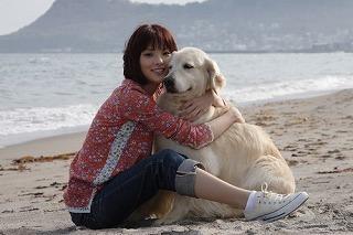 犬と私の10の約束2
