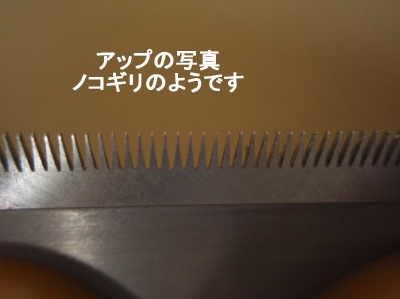 aP5020020.jpg