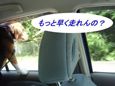 aP5160003.jpg