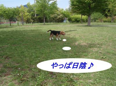 aP5160012.jpg