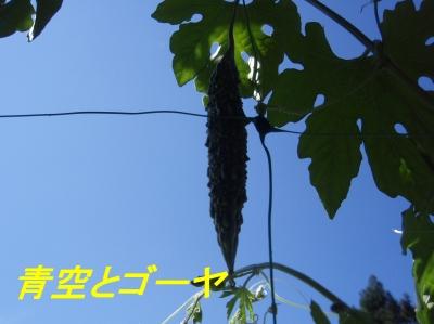 aP7190017.jpg