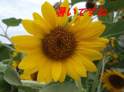 aP8130003.jpg