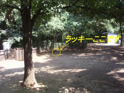aP8220016.jpg
