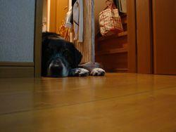 ドアの空ちゃん