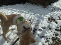 雪の上のルナ