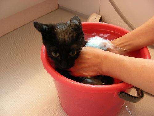 ルナお風呂