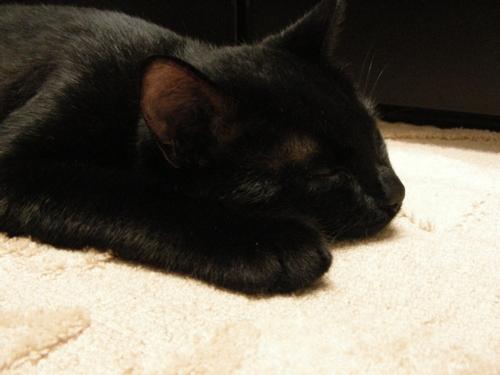 LUNA-Sleep1