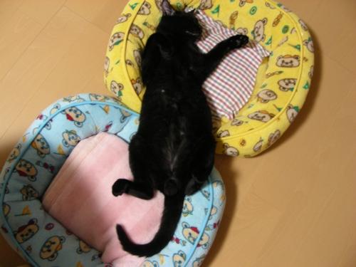 LUNA-Sleep24
