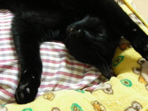 LUNA-Sleep23