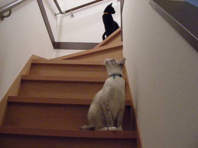 OnTheStairs1