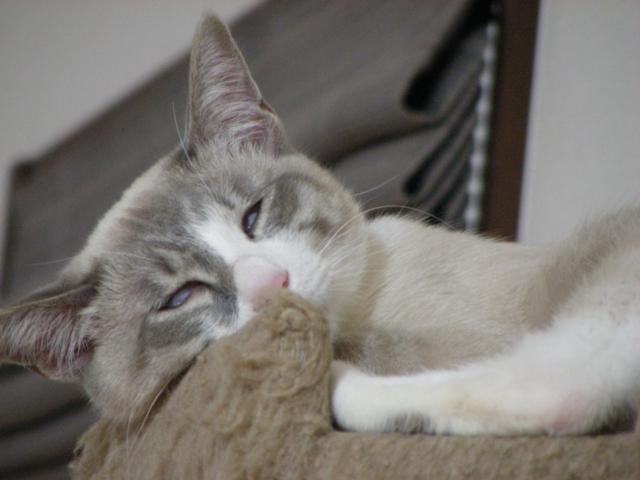 SleepingStyles3