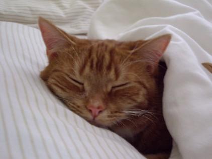 朝寝坊ルナ