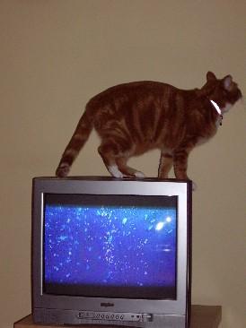 luna TV2