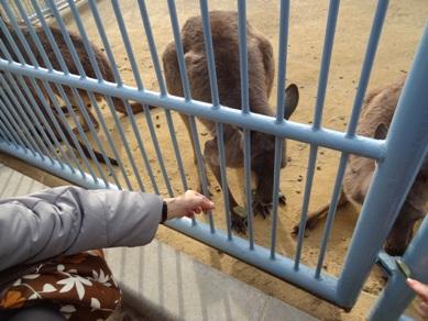 浜松市動物園1