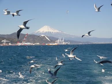 ユリカモメと富士山