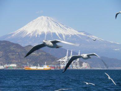ゆりかもめと富士山