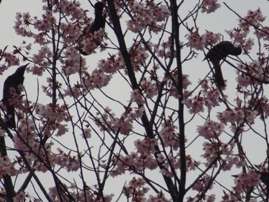 刈谷市運動総合公園の桜と鳥