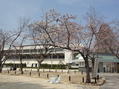 刈谷市亀城公園の桜2