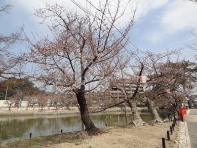 刈谷市亀城公園の桜3