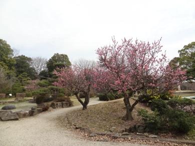 刈谷市亀城公園の桜4