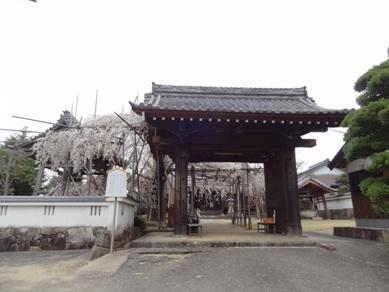 宿縁寺の桜2