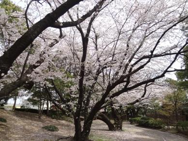 桜ヶ丘ミュージアム1
