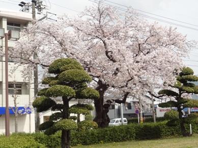 桜ヶ丘ミュージアム2