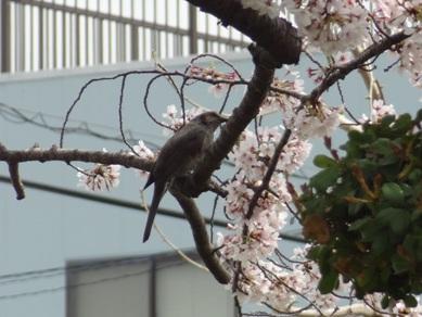 桜ヶ丘ミュージアム3