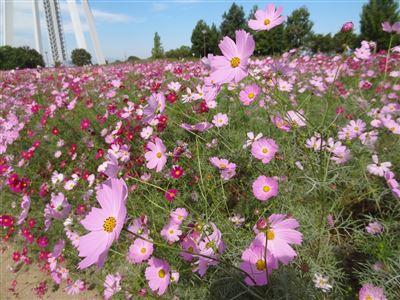 木曽三川公園138タワーパーク5