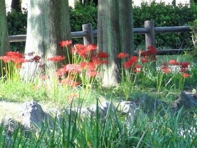 庄内緑地公園10