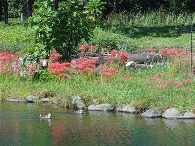 河川環境楽園木曽川水園8