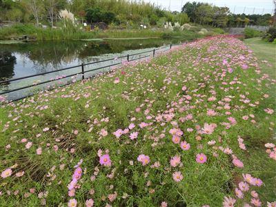浜名湖ガーデンパーク6