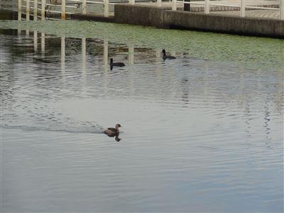 浜名湖ガーデンパーク5