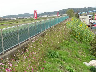 源氏の里ひまわり4