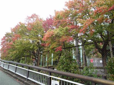 東山動物園の紅葉3