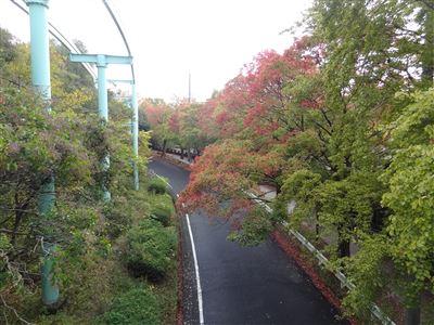 東山動物園の紅葉4