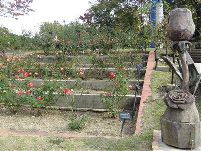 東山植物園のバラ園1