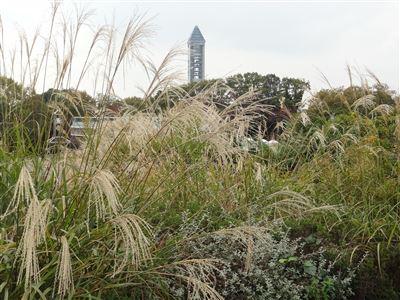 東山植物園のお花畑