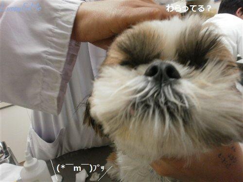 Luppy変顔1