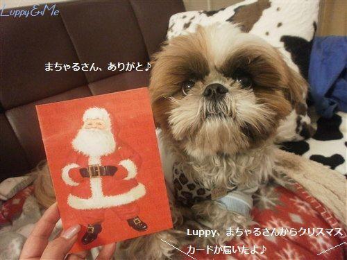 まちゃるさんからクリスマスカード