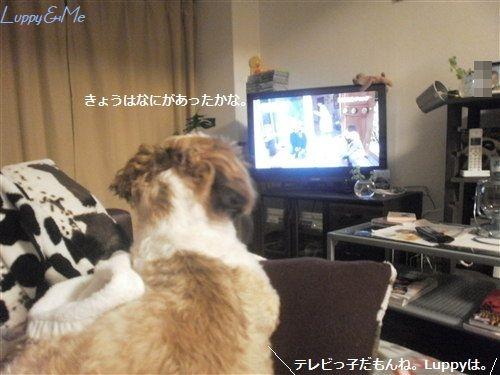 テレビテレビ♪