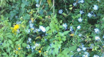 雑草の中の青い花