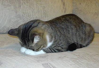 おじぎ猫 ②